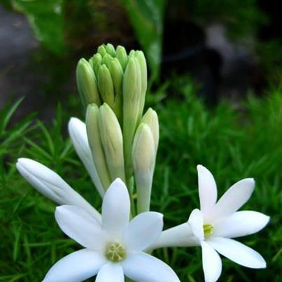 Bài thơ thiếu nhi: Hoa nở
