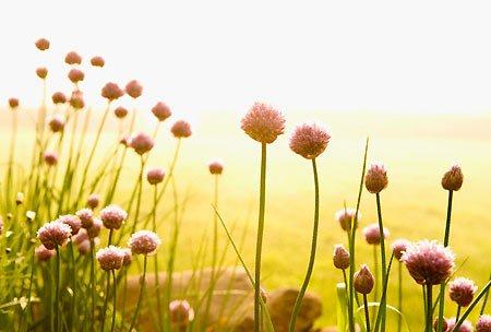 Bài thơ Nắng mùa hè - Thơ mầm non - Ảnh sưu tầm