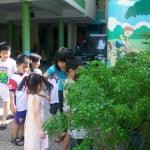 Giờ học quan sát vườn cây trường mầm non Họa Mi