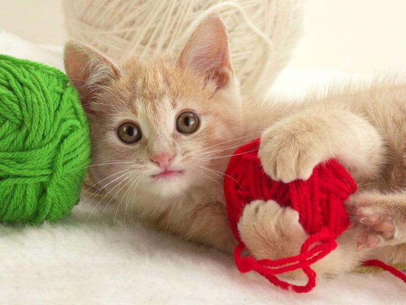 """Bài thơ """"Mèo Con Đi Học"""" - Thơ mầm non hay"""